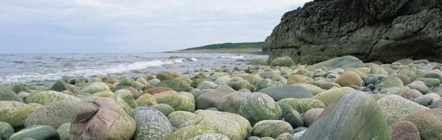 884 stenar trimmad