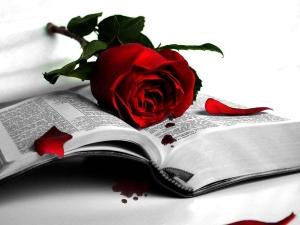 Beautiful-Red-Roses-roses-34610964-1280-960