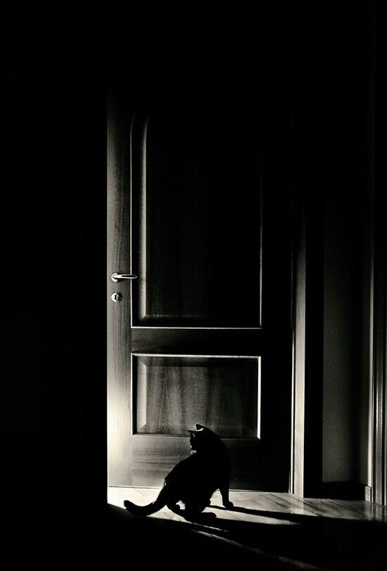 Fear, cat by door Photography Black and White Pinterest