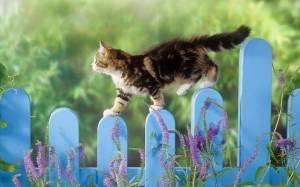 393300-cats-walking-a-fence-line