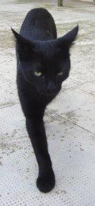 Cat_walking_DSC08739