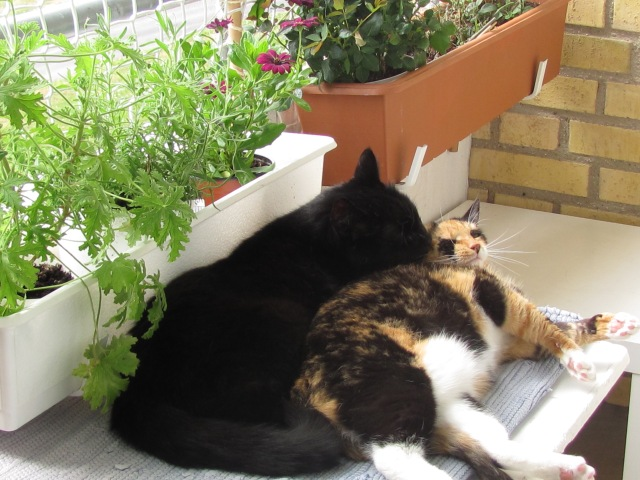 My calico cat with my black male cat, He is now deceased.