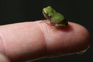 babyfrog
