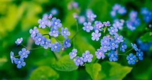 blå blomma 2