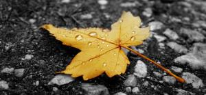 raindrops_on_fallen_leaf-autumn_landscape_-trimmad
