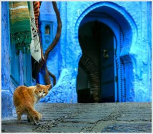 Cat in Chefchaouen Morocco