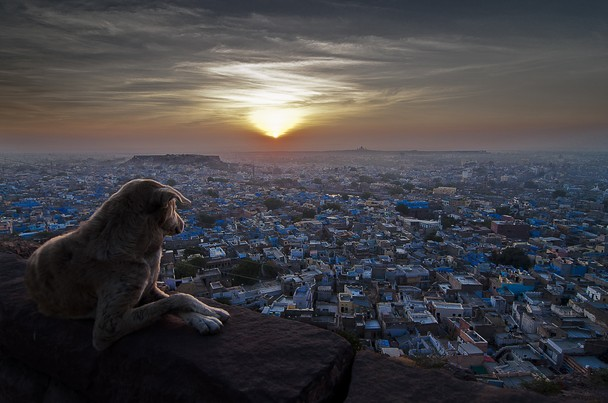 photo-and-caption-by-sudharshun-gopalan